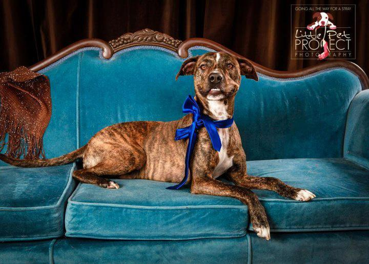 Florida Big Dog Rescue - Tampa Bay Florida